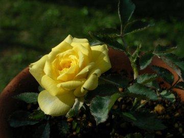 Minibara_yellow090527