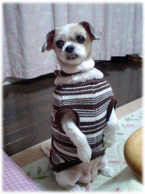 愛犬ミュウいつものポーズ