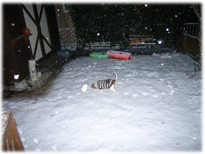 雪の中のミュウ